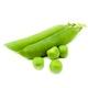 Горох стручковый (зелёный)