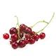 Смородина красная свежая